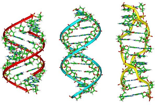 Ácidos nucleicos: ADN | Uruguay Educa Репликация ДНК Анимация