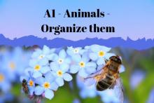 Animals organize